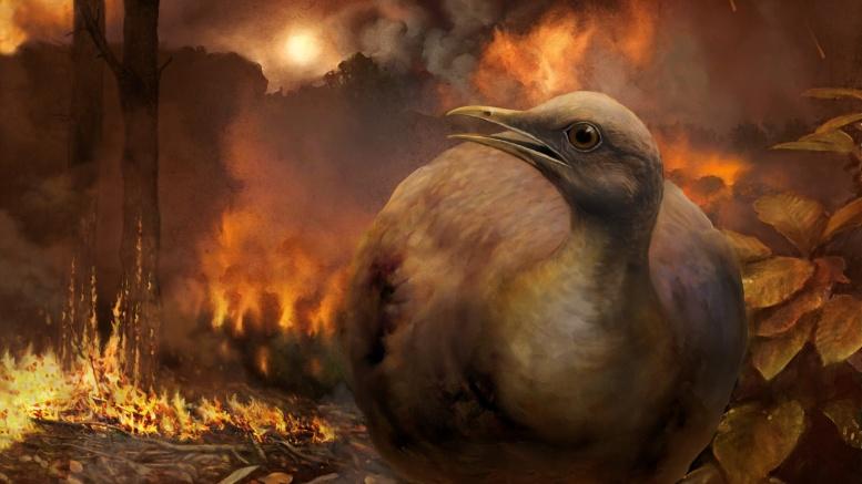 Ground-dwelling bird